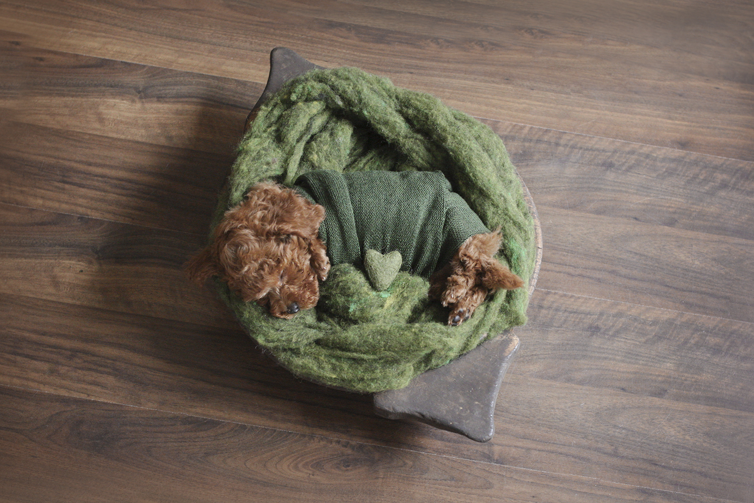 Newborn puppy sleeping in wooden bowl on wooden floor with green felt and wrap and felt heart