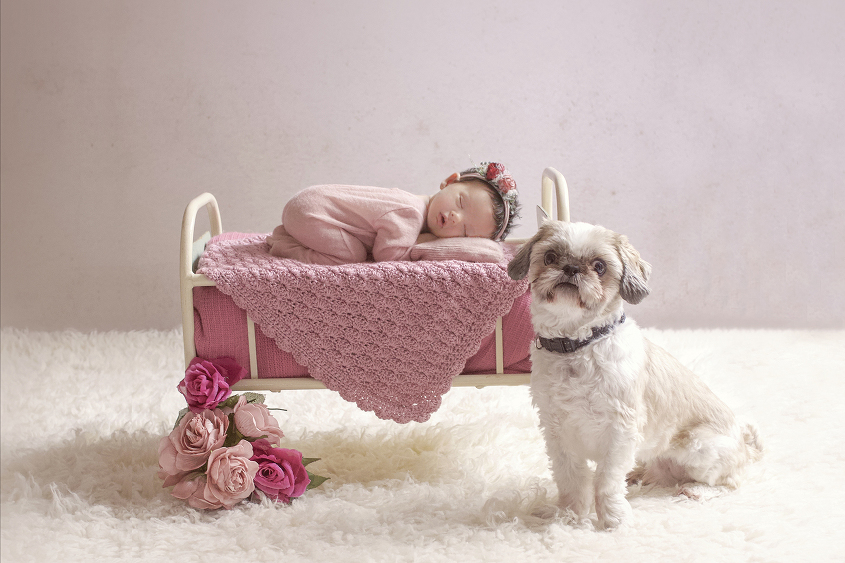 Newborn baby girl sleeping in cream iron bed with pink blanket and knit layer on cream fur with pink flowers wearing pink romper and pink flower tieback and dog sitting down