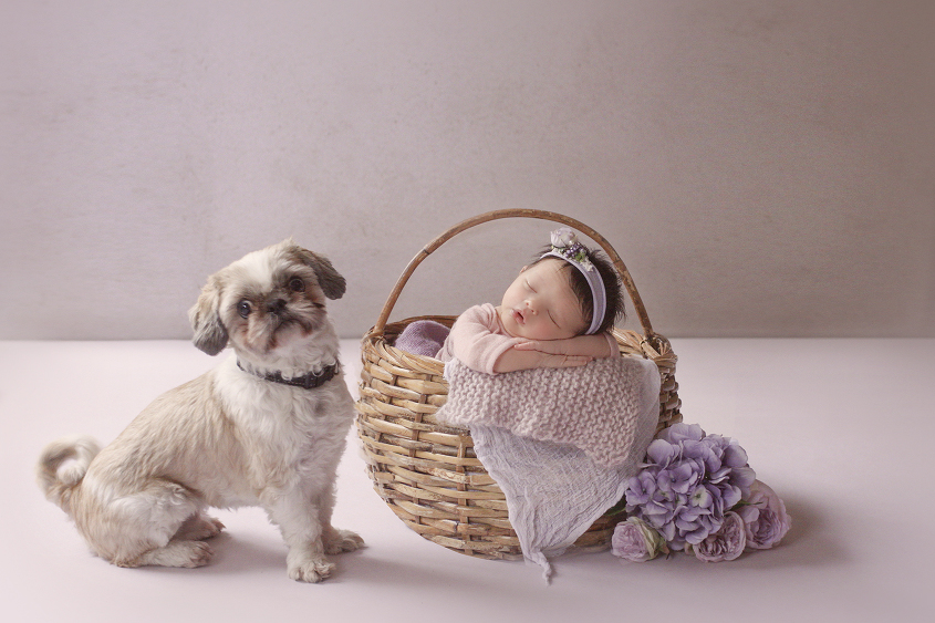 Newborn baby girl sleeping in cane basket with purple blanket and knit layer and flowers with dog sitting beside her
